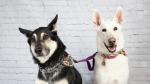 mit liebe german shepherd rescue pet expo photos